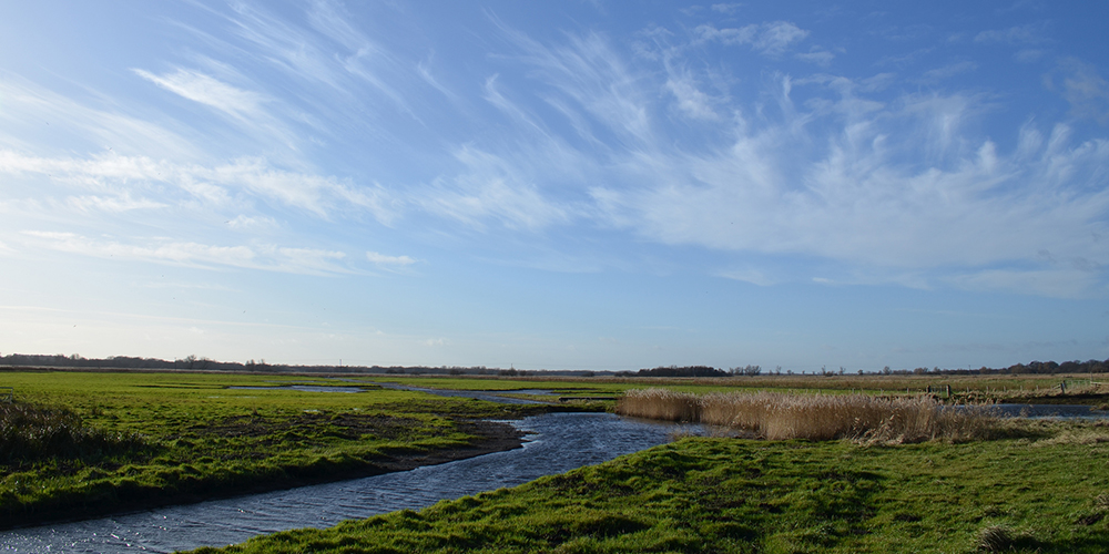 A bold vision for Carlton Marshes