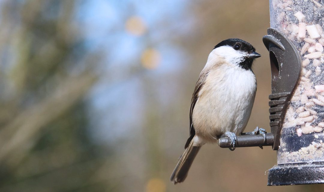 How to give your garden wildlife a hand this winter