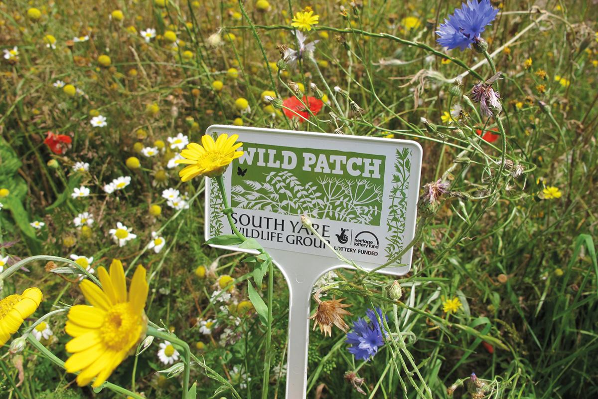 A garden wild patch full of flowers