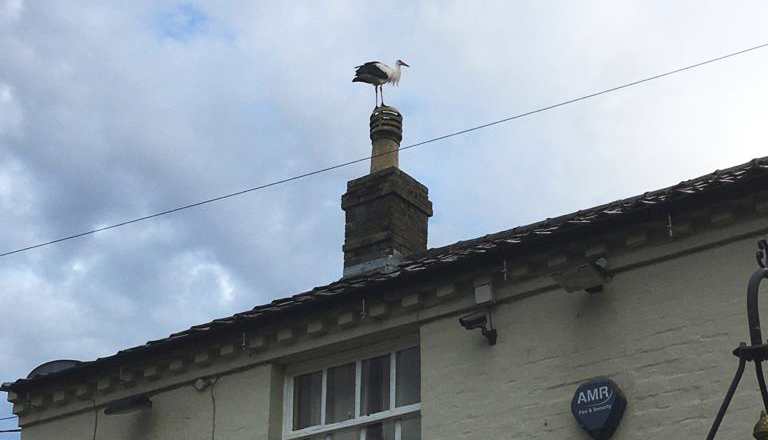 A visit from Doris the White Stork