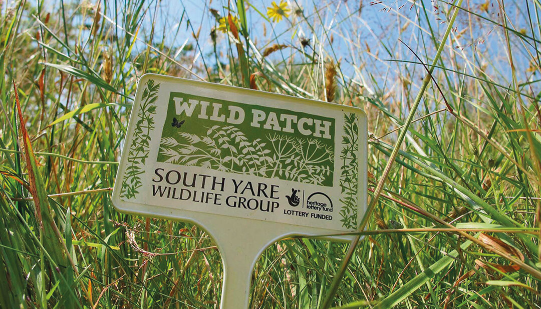 Taking Wild Patch to scale through collaboration with WildEast